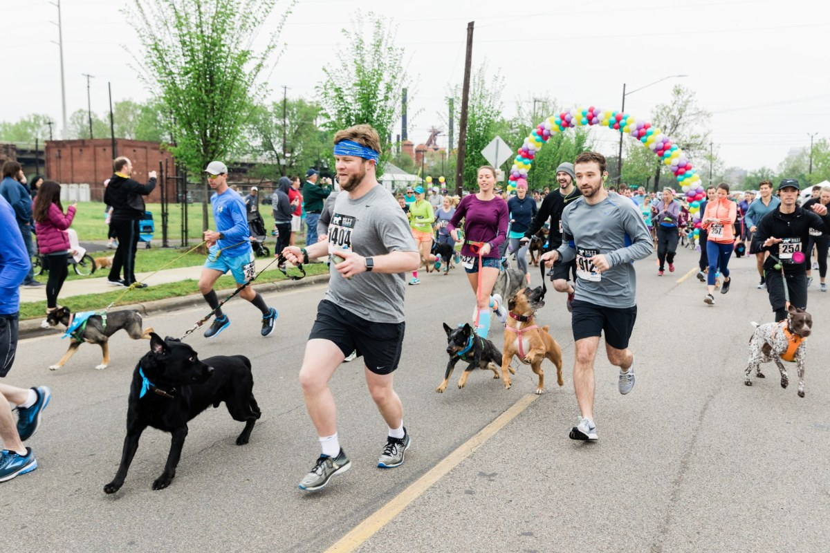 Mutt Strut is 10! Come to Hand in Paw's dog-friendly run and pawty Saturday, April 20