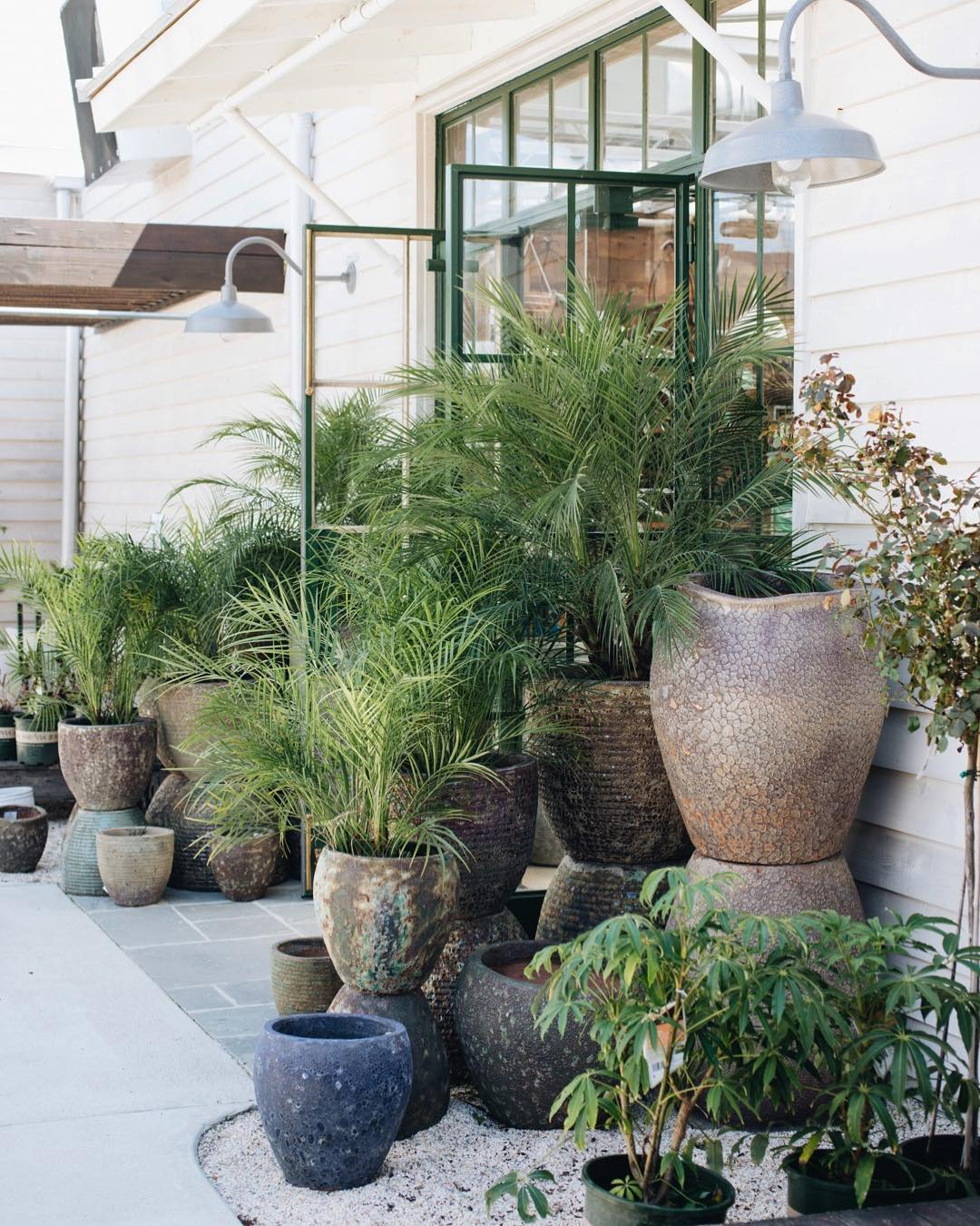 These planters from Leaf & Petal pair perfectly with Majesty Palms. This combination is perfect for providing some height on your patio or dividing the space for a bit of privacy.