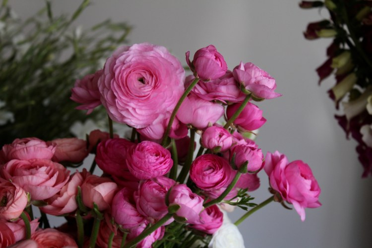 Ranunculus is always a favorite among flower-lovers in Birmingham.