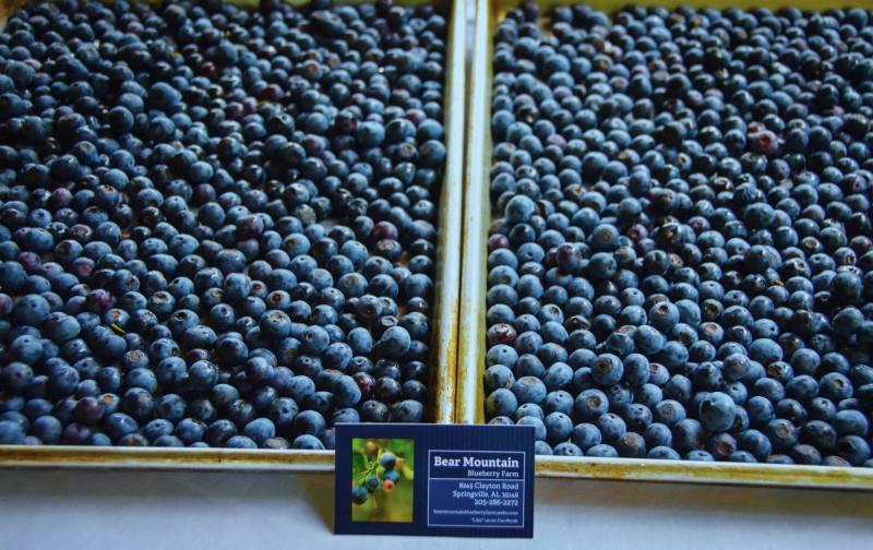 Bear Mountain Blueberry Farm is a u-pick farm near Birmingham.