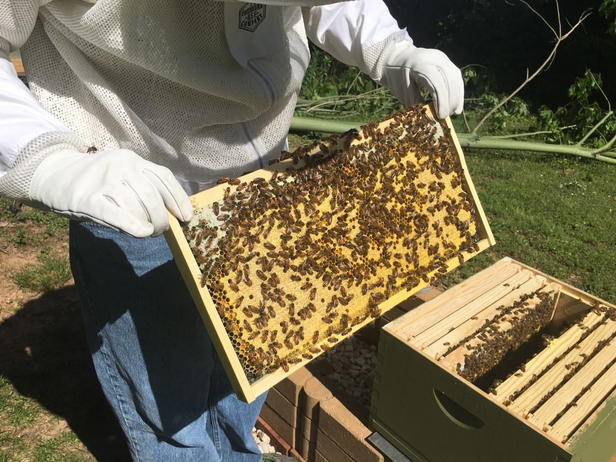 12 things to know about local honey in Birmingham, including what to do about a swarm