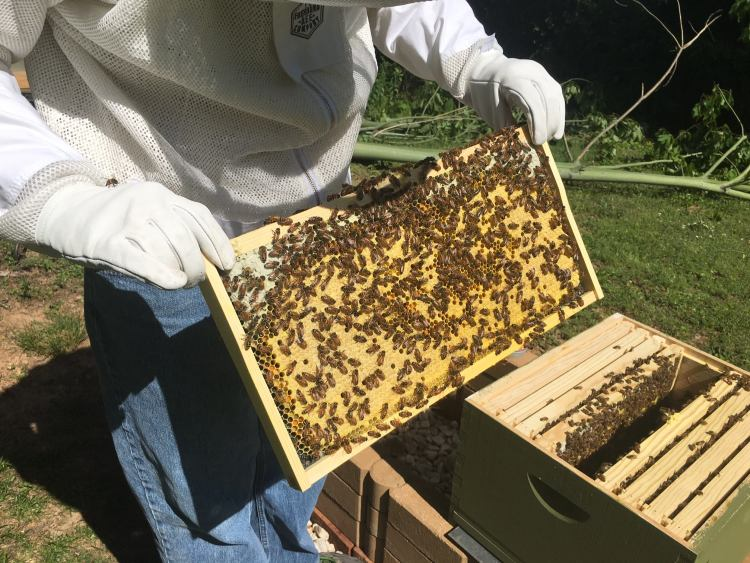 A local honey producer checking a hive.