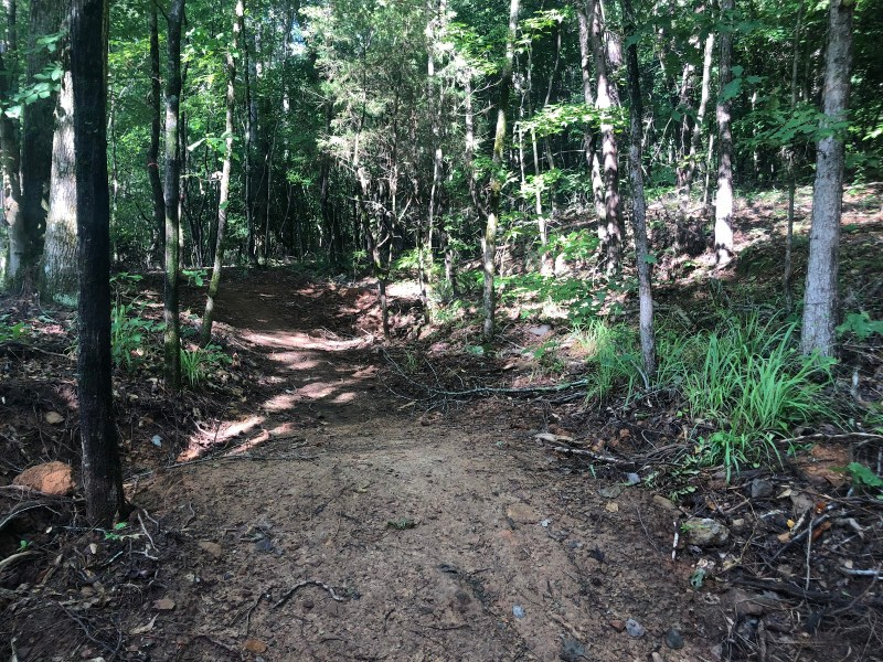 Looking up at part of the Black Creek Mountain Bike Trail in Hoover, Alabama