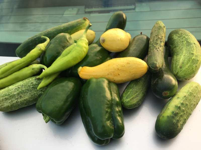 Harvest from the Bush Hills Community Garden.
