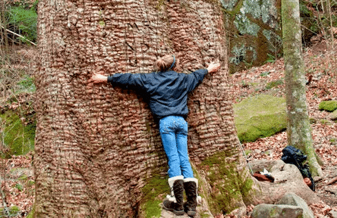A young girl hugs The Big Tree in the Sipsey Wilderness