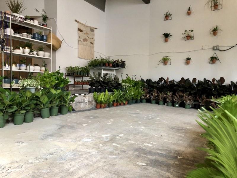 Lots of pot plants