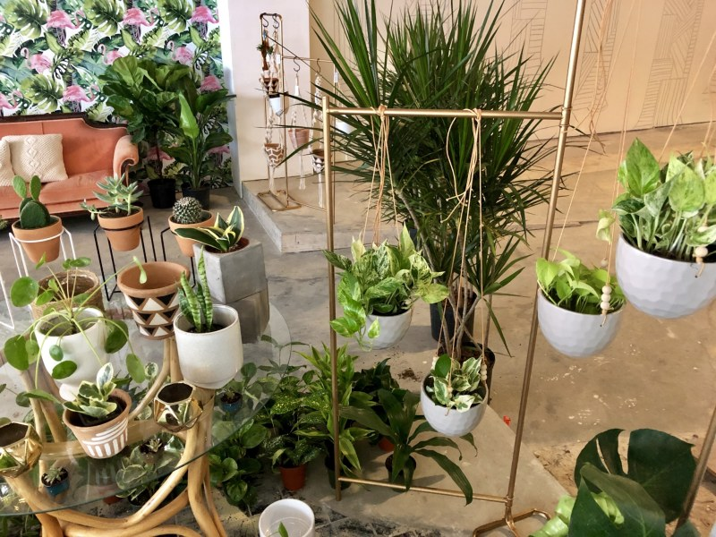 Pot plants and jewelry
