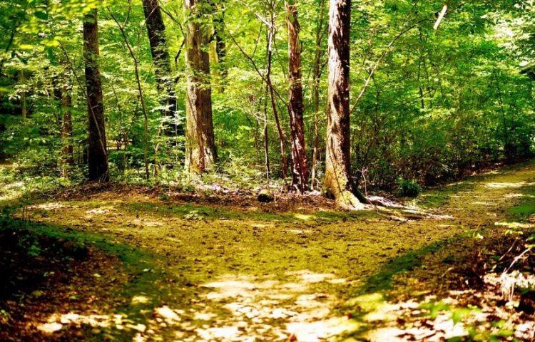 Natural track