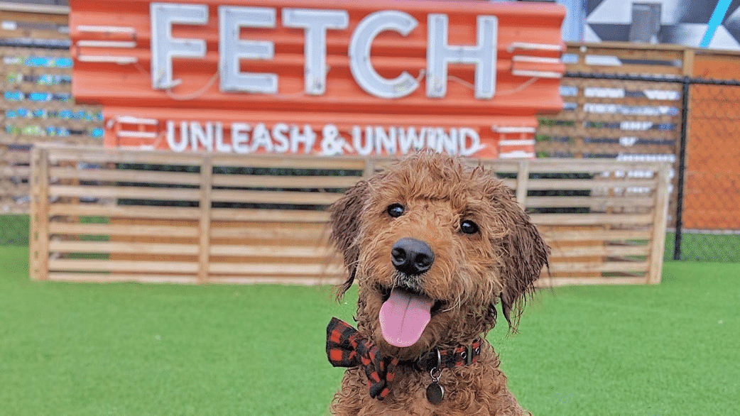 Pup Park? Brew Bar? Both. Fetch is coming to Birmingham!