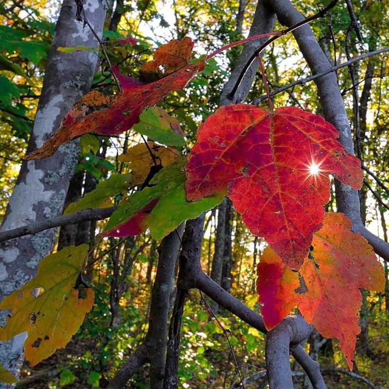 Birmingham, Driver's Way, drives, leaves, fall, fall season, fall drives