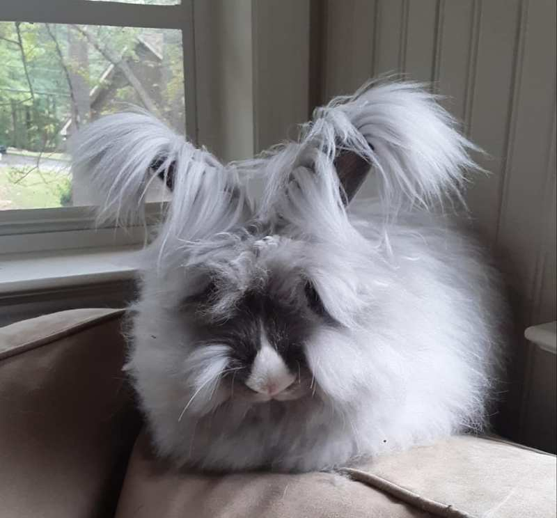 One of the Birmingham bunnies from Alabama Rabbit Rescue.