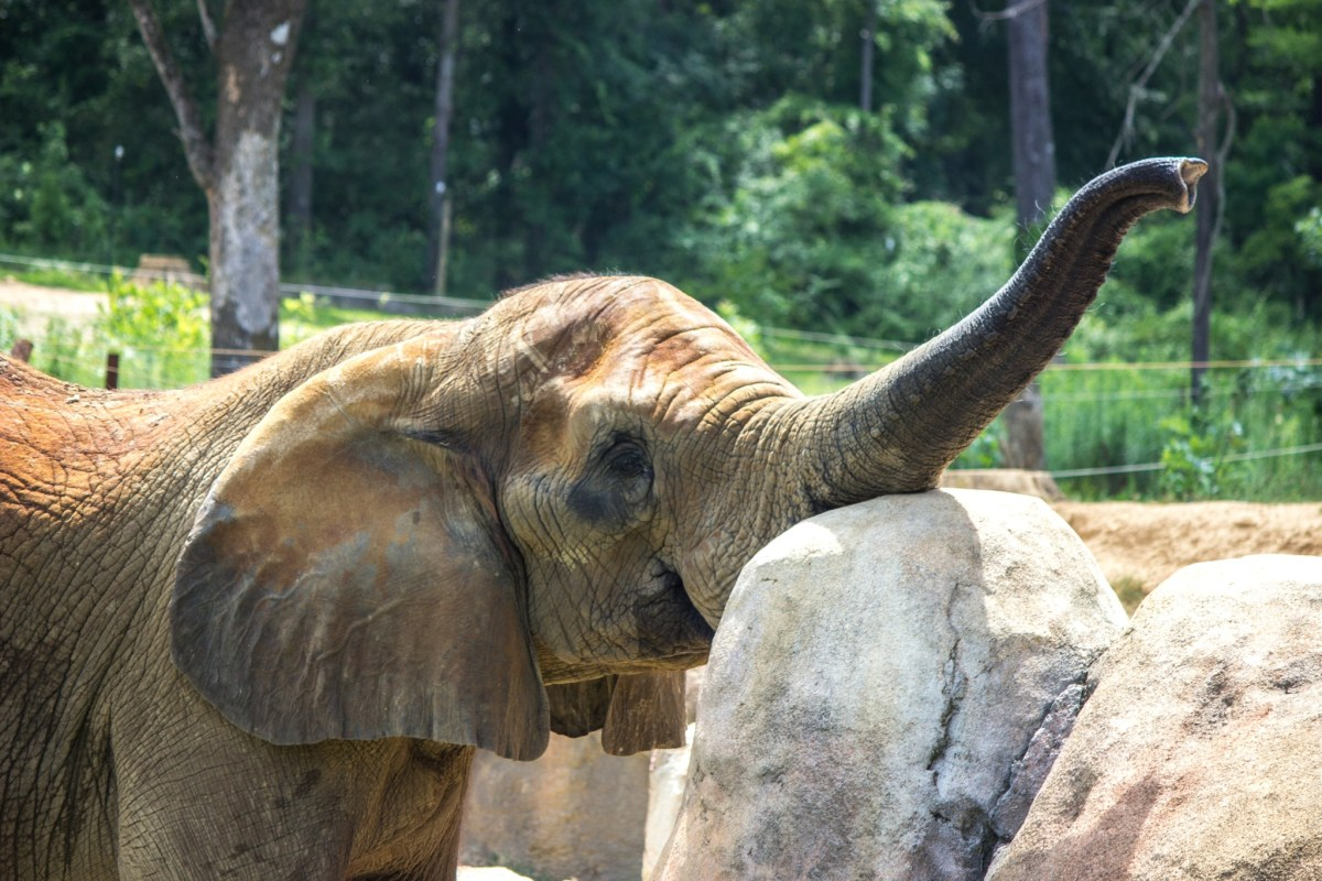 Unique event—brunch with elephants at The Zoo. Here's how.