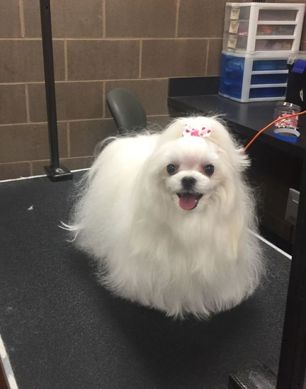 Emily and Eli's Dog Grooming Salon in Hoover