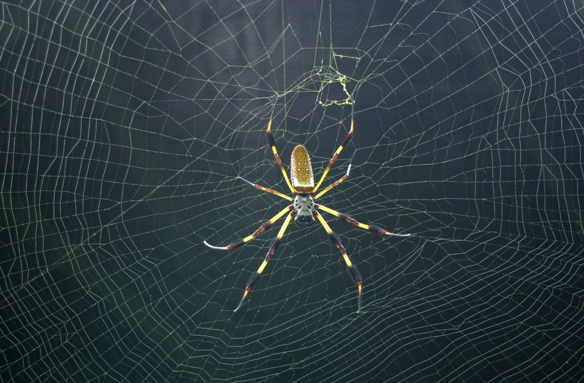 Spiders, ticks and poison ivy. Local scientists share examples of Alabama's changing climate