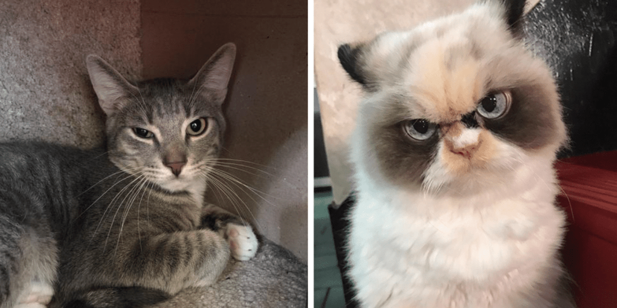 Do you have Birmingham's grumpiest cat? You could win $100 for charity.