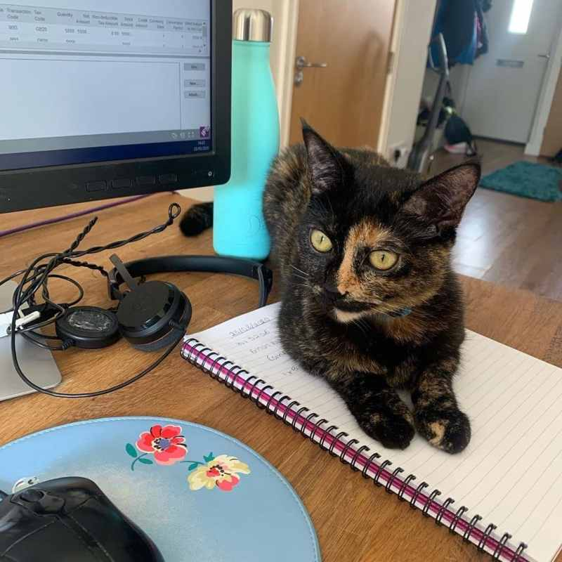 Birmingham, cats, working at home