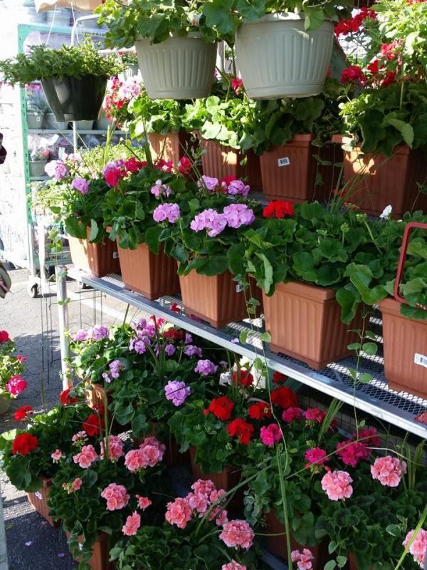 Birmingham, Murphree's Market + Garden Center, gardening, flowers, plants