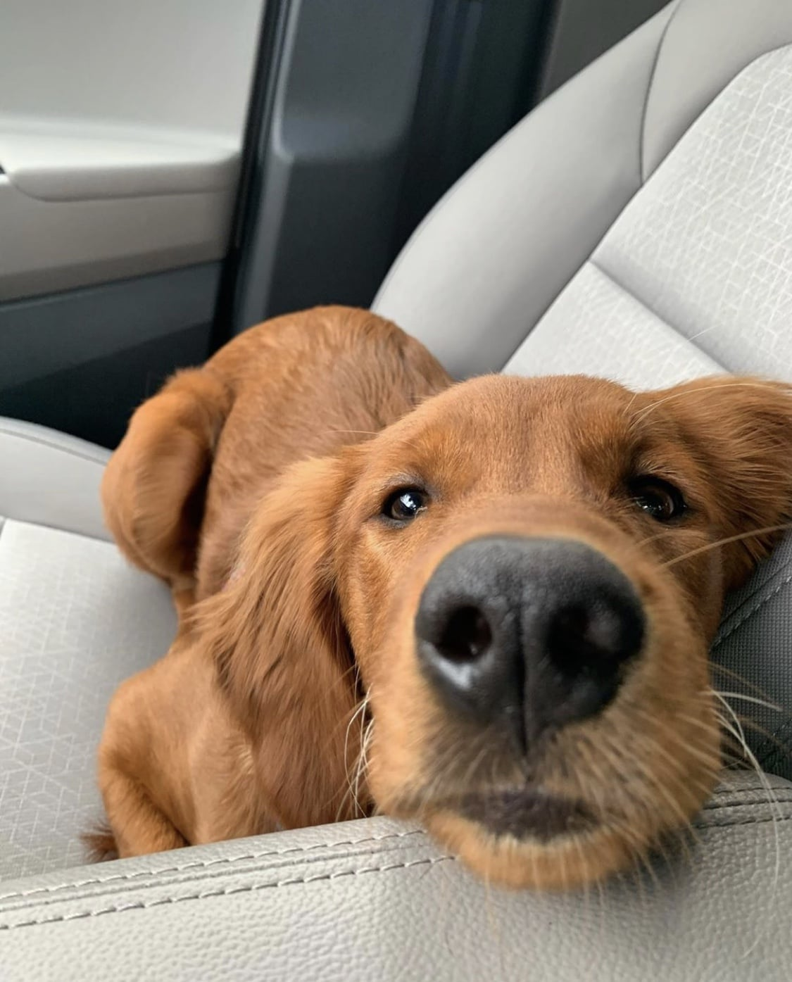 Birmingham, dogs, animals, Instagram pets