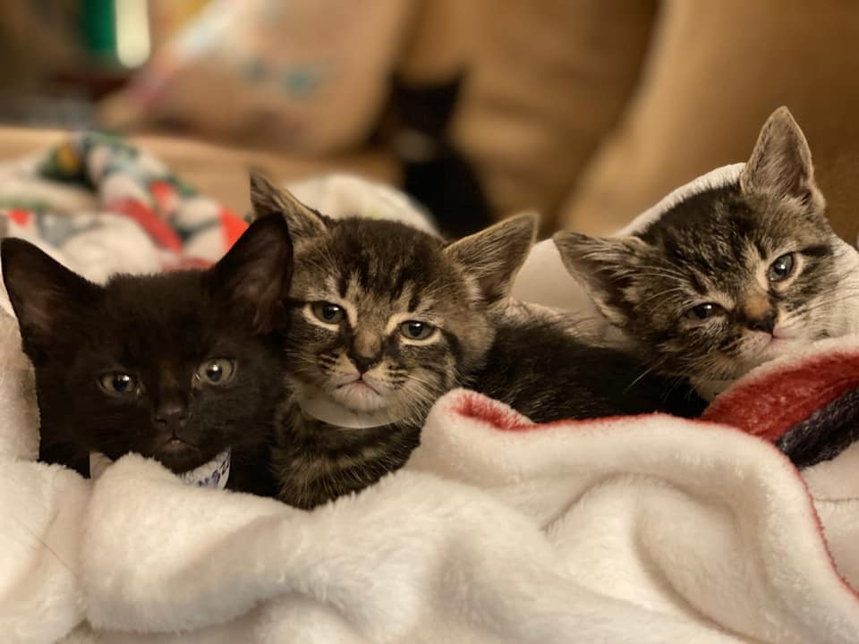 Here's how to adopt animals in Birmingham right now