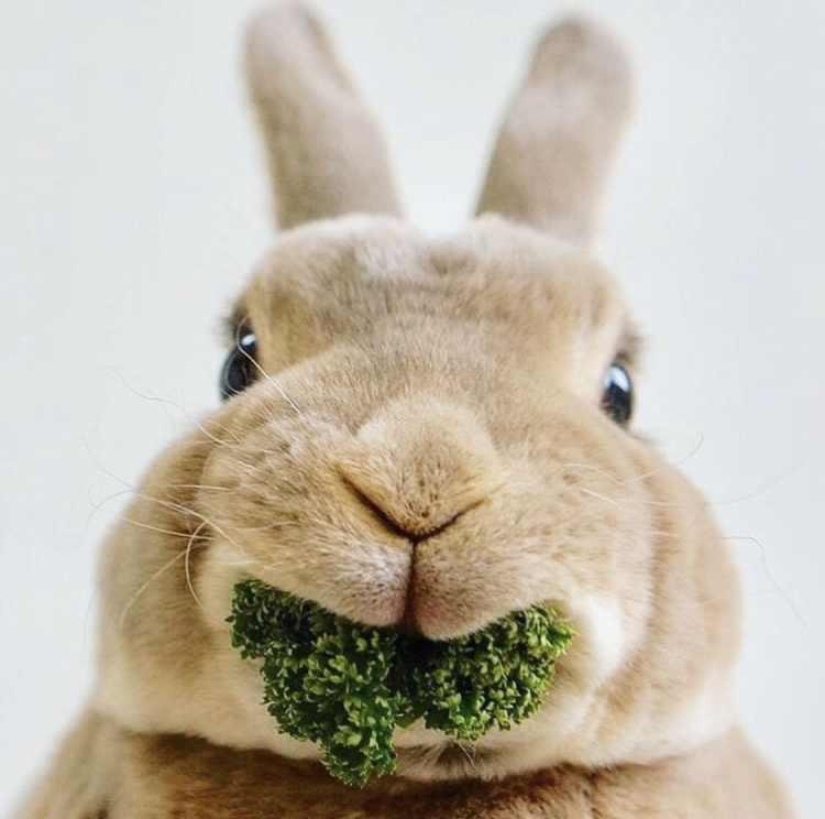 Birmingham, rabbit