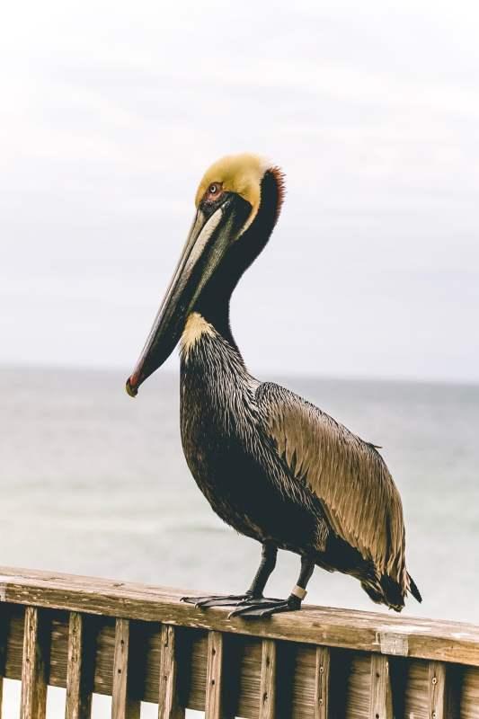 Birmingham, Gulf Shores, Gulf Shores Tourism, Orange Beach, beach, vacation, birding