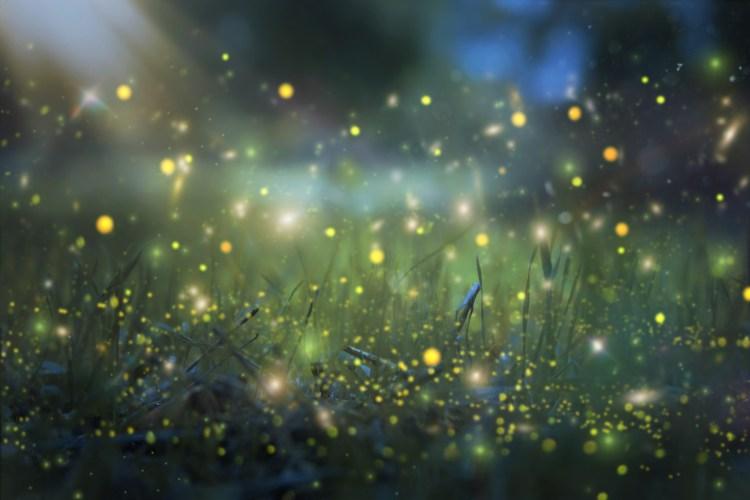 Birmingham, fireflies, lightning bugs