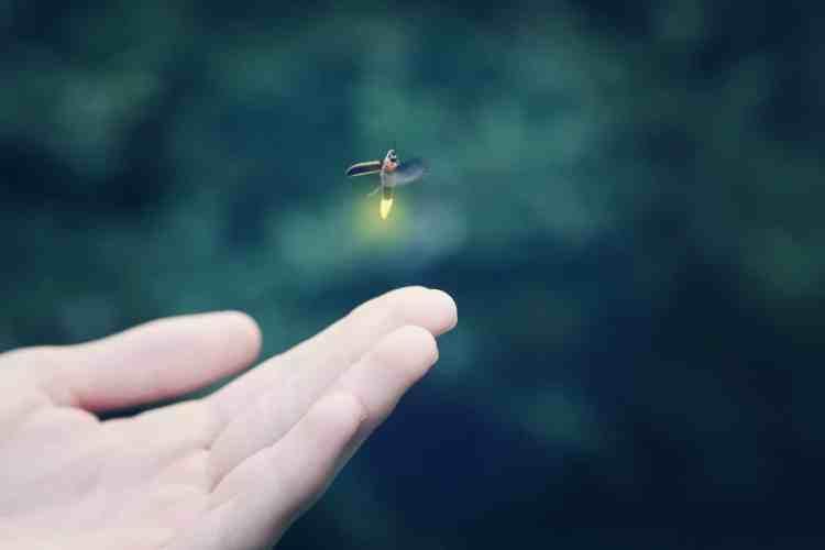 Birmingham, lightning bugs, fireflies