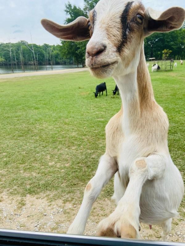Birmingham, Goat Island, Lake Martin