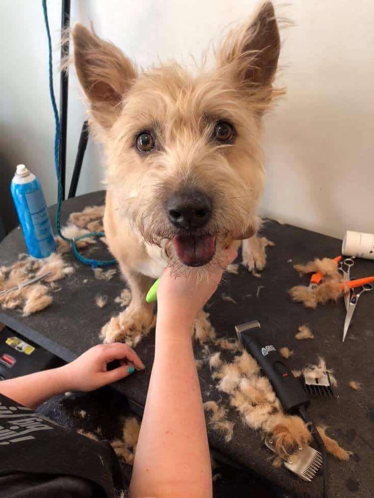 Birmingham, Homewood, Wags 'n Whiskers Comprehensive Pet Care, pet grooming