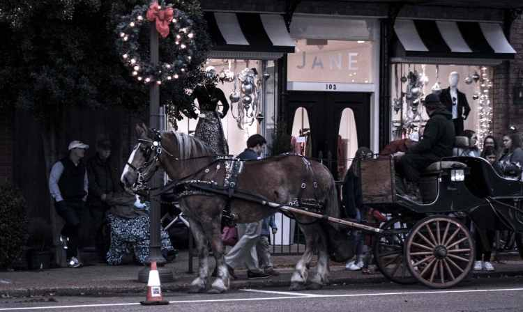 Horse drawn carriage in Oxford MS for Holly Jolly Holidays
