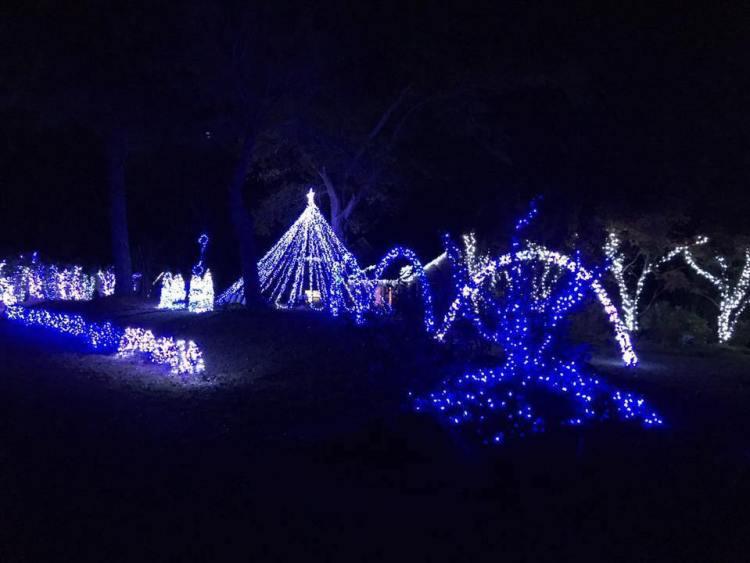 Bama Lights