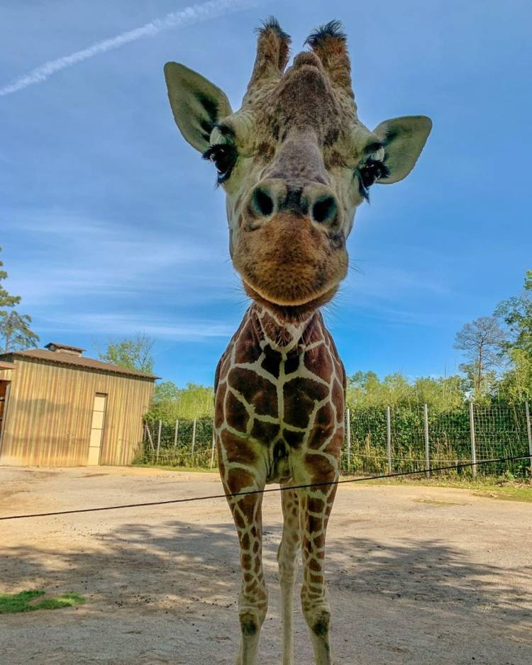 Birmingham Zoo, giraffe, animals