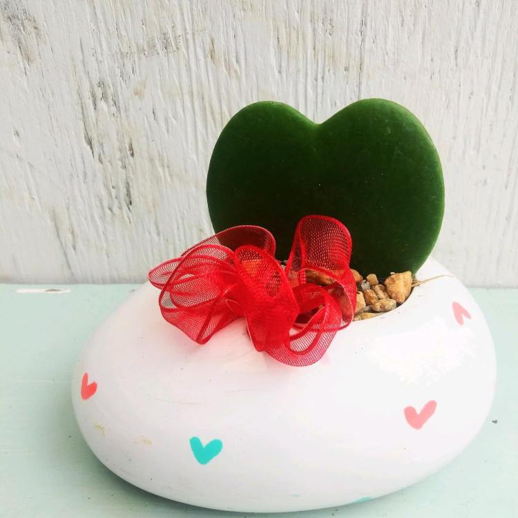 Sweet Pea's Garden Shop, plants, Valentine's