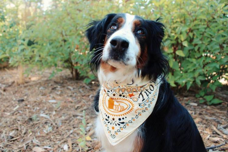 Dog promoting Rojo by wearing a Tito's bandana