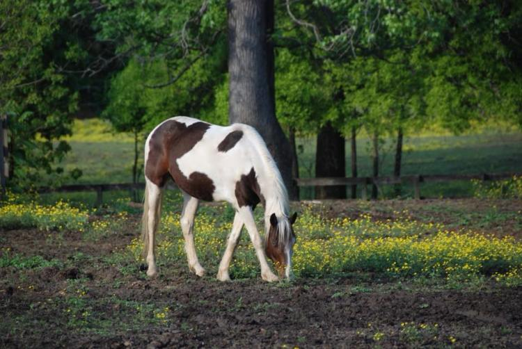 Rusted roof barn horse