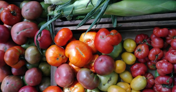 Garden Bounty with tomatoes and corn