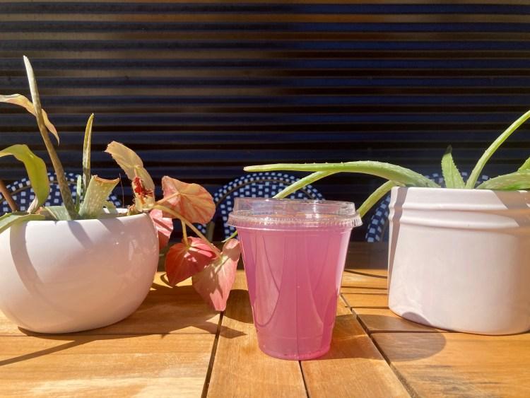 cup of purple kombucha