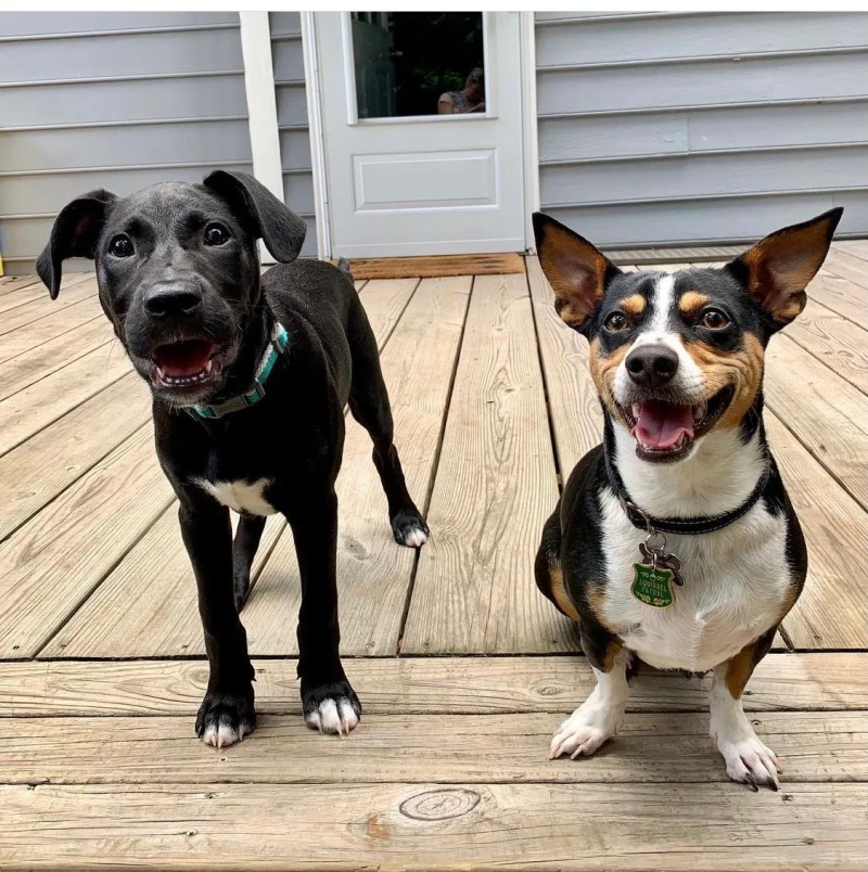 The dog days of summer: TK adoptable dogs in Birmingham
