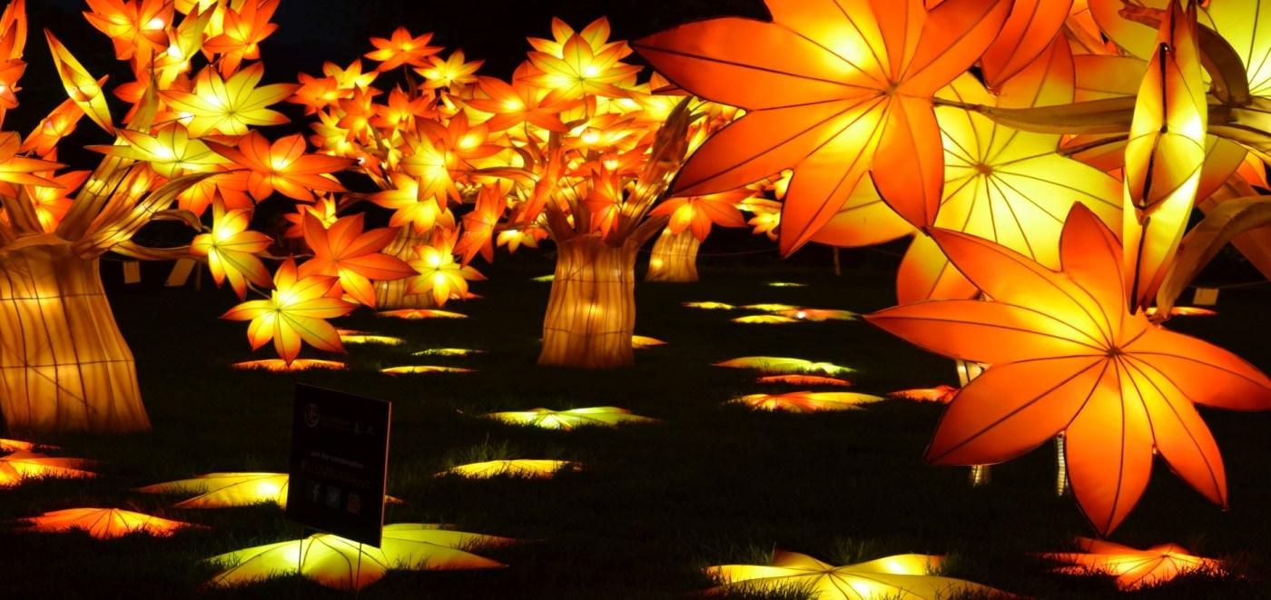 maple tree lanterns