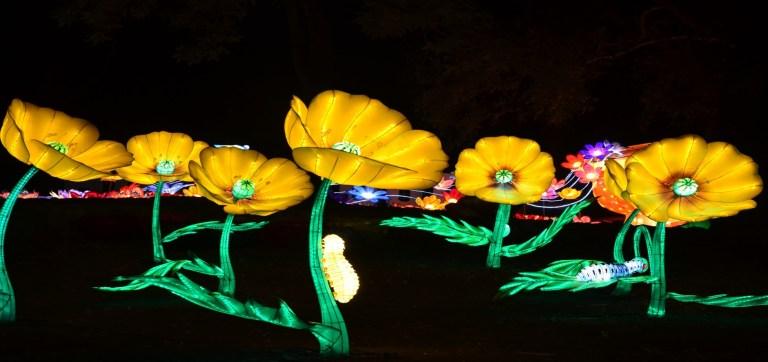 Night Blooms at Huntsville Botanical Gardens lights the way