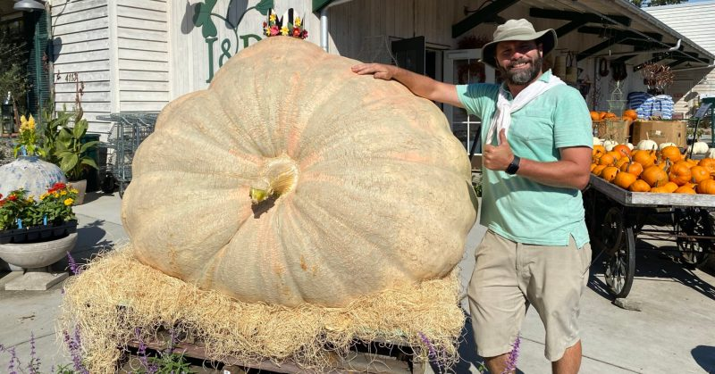 Get a load of the Great Pumpkin—photos of Leaf & Petal's 1000-pound pumpkin