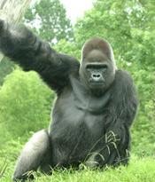 Babec - Birmingham Zoo