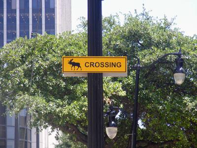 Moose crossing sign in downtown Birmingham