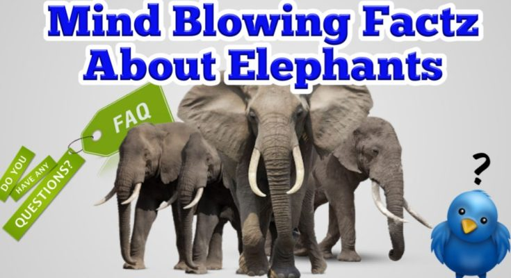 Mind blowing facts about elephants