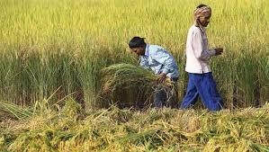 घोषित 154 करोड़ 43 लाख रूपये की मुआवजा राशी को किसानों के साथ धोखा