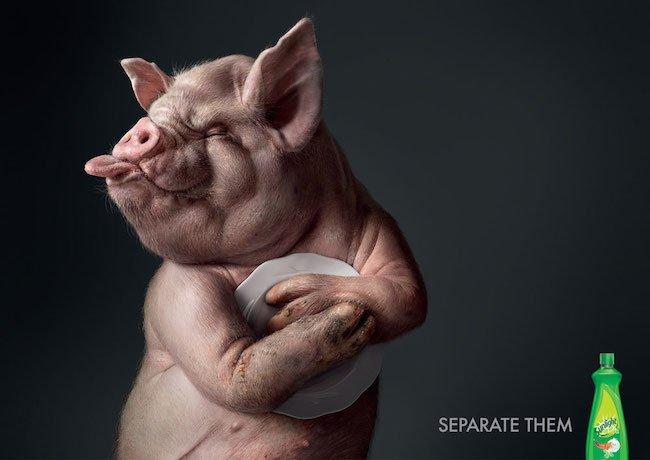 sunlight-pig