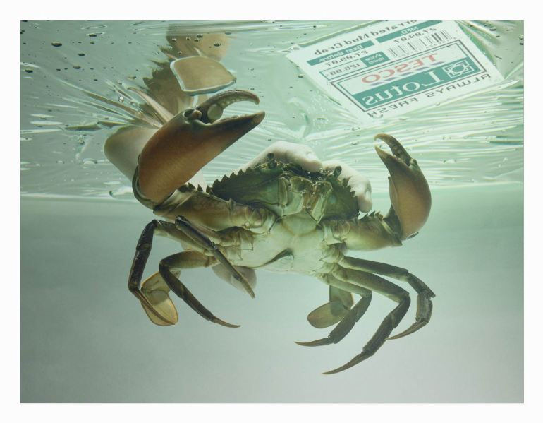 Tesco crab