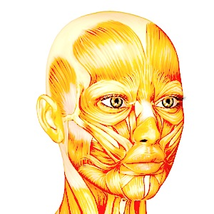 Tetanus disease first manifests in the facial muscles.