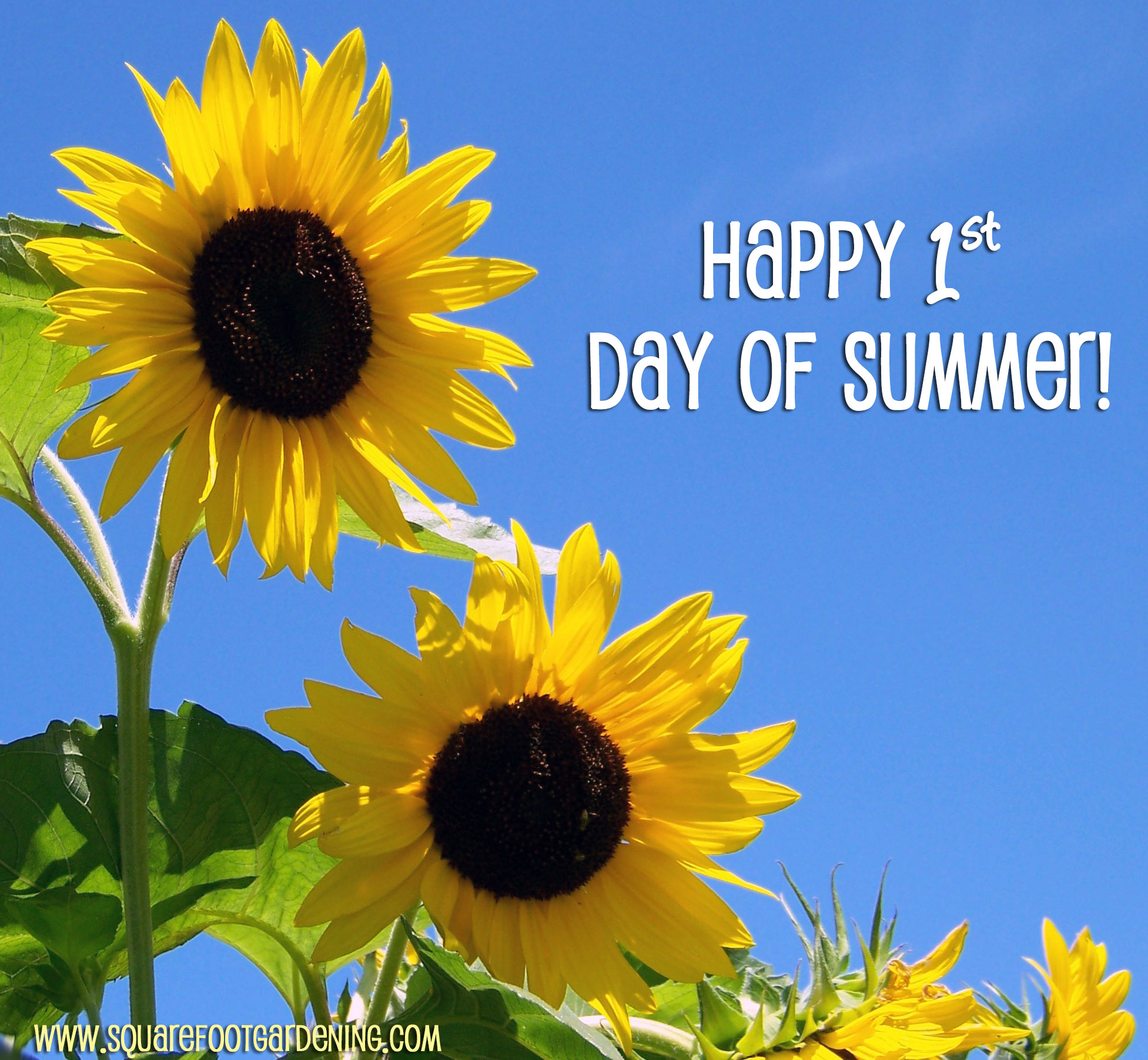 International Yoga Day Happy First Day Of Summer June