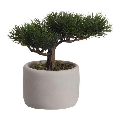 deko-bonsai-mini-pine-plant